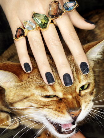Cute cat image of lady wearing ring and petting unwilling cat