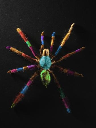 Rainbow Spider Fotoprint van Graeme Montgomery