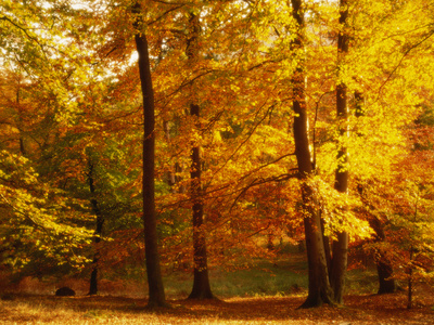 Autumn Trees Cumbria England Photographic Print by Green Light Collection