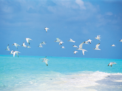Flock of Birds Migrating Over Seascape Photographic Print by Green Light Collection