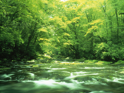 Stream Flowing Through a Forest Photographic Print by Green Light Collection