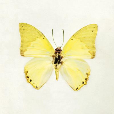 Butterfly Impression III Giclee Print by Irene Suchocki