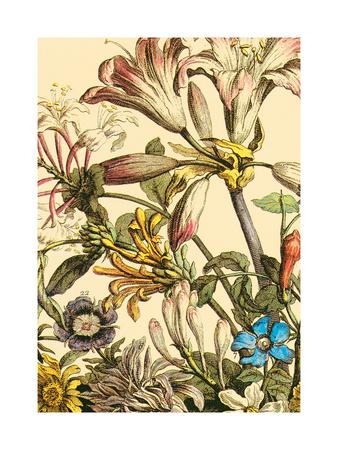 Furber Flowers III - Detail Prints by Robert Furber