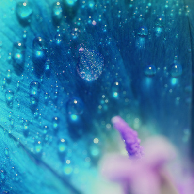 Morning Dew on Flower Posters