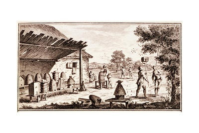 Beekeeping, from 'Dictionary of Sciences', C.1770 (Detail) Giclee Print by Denis Diderot