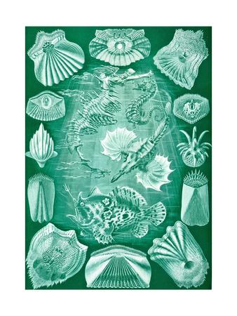Collection of Teleostei from 'Kunstformen Der Natur', 1899 Giclee Print by Ernst Haeckel