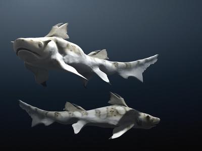 Hybodus Shark Photographic Print by Christian Darkin