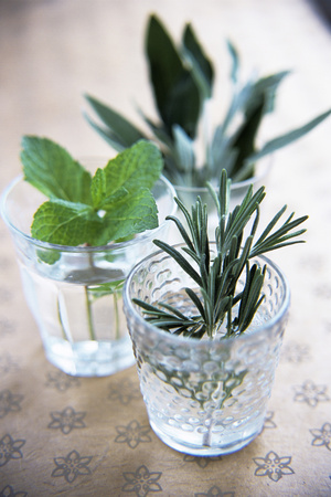 Herbs Photographic Print by Veronique Leplat
