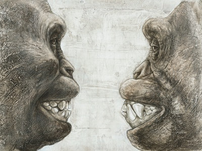 Australopithecus And Chimpanzee Teeth Premium Photographic Print by Kennis and Kennis