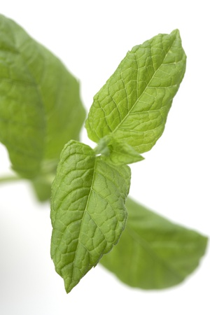Mint Leaves Photographic Print by Jon Stokes