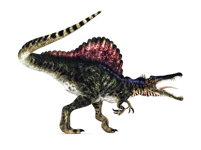 Spinosaurus Dinosaur, Artwork Photographic Print
