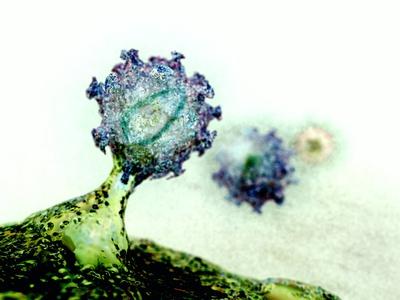 Budding HIV Particle, Computer Artwork Photographic Print