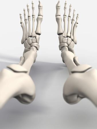 Skeleton's Feet, Artwork Photographic Print by David Mack