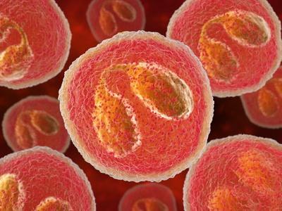 Eosinophil White Blood Cells, Artwork Photographic Print by David Mack