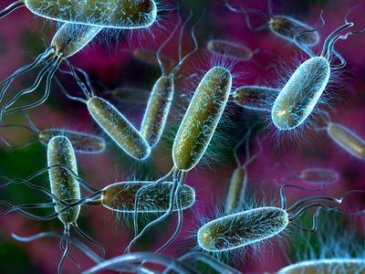 E. Coli Bacteria Photographic Print by David Mack