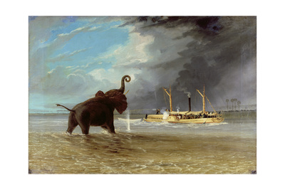 'Ma Robert' and Elephants in the Shallows of the Shire River, 1858 Giclee Print by Thomas Baines