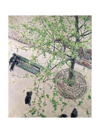 The Boulevard Viewed from Above, 1880 Giclee Print by Gustave Caillebotte