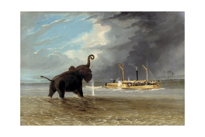 The 'Ma Roberts' and an Elephant in the Shallows, Lower Zambezi, 1859 Giclee Print by Thomas Baines