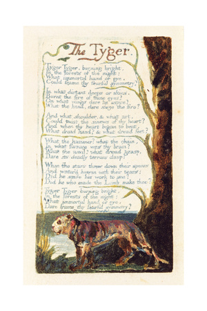 'The Tyger', Plate 41 from 'Songs of Experience', 1794 Giclee Print by William Blake