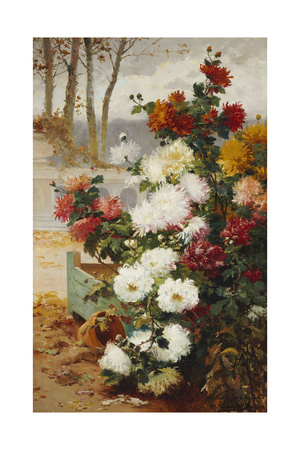 Chrysanthemums in a Walled Garden Giclee Print by Eugene Henri Cauchois