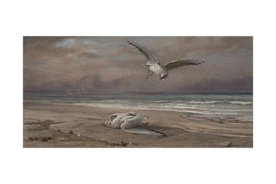 The Dying Sea Gull, 1879 Giclée-Druck von Elihu Vedder