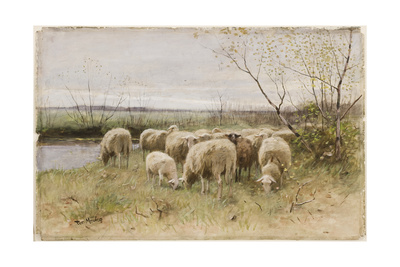 Sheep Giclee Print by Francois Pieter Ter Meulen