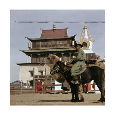 Mongolian on Horseback Transporting His Yurt on a Camel, in the Centre of Ulan Bator Giclee Print