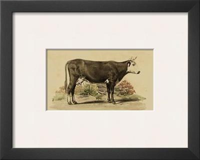 Antique Cow IV Art by Julian Bien
