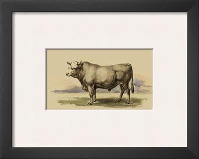 Antique Cow I Prints by Julian Bien