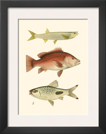 Antique Fish II Poster by Ernest Briggs