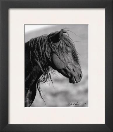Wild Stallion I Posters by Claude Steelman