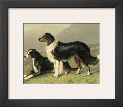 Sheep Dogs Prints by Vero Shaw