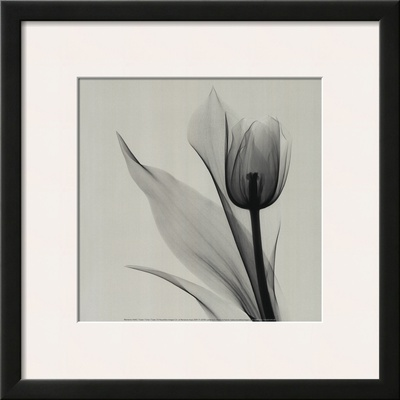 Tulip Art by Marianne Haas