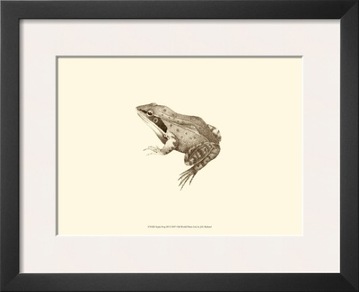 Sepia Frog III Prints by J. H. Richard