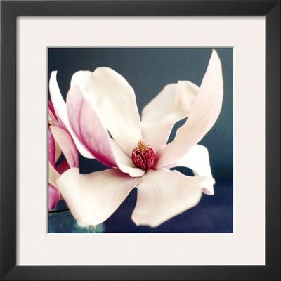 Magnolia Posters by Amelie Vuillon