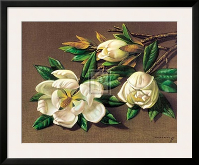 Magnolias Prints by Vladimir Tretchikoff