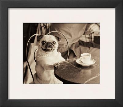 Cafe Pug Prints by Jim Dratfield