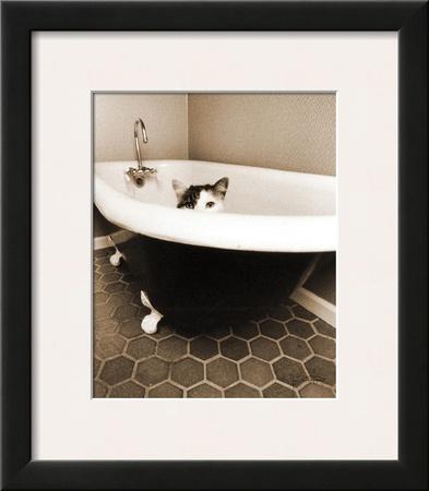 Kitty III Posters by Jim Dratfield