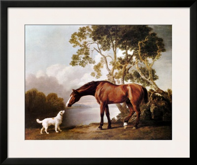 Bay Horse and White Dog Posters by George Stubbs
