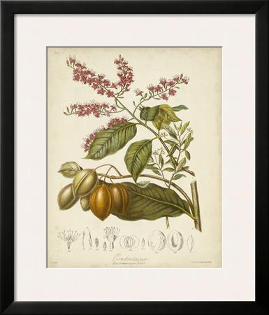 Twining Botanicals IV Art by Elizabeth Twining