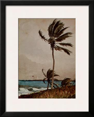 Palm Tree, Nassau Posters by Winslow Homer