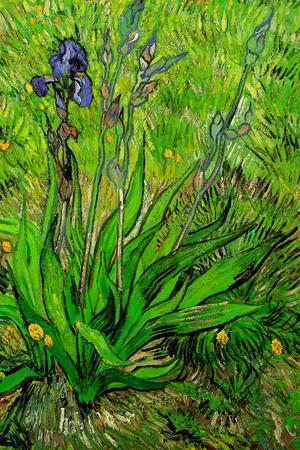 Vincent Van Gogh The Iris Plastic Sign Plastic Sign by Vincent van Gogh