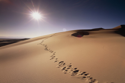 Footprints Over Sand Dunes Photographic Print by Jeremy Walker