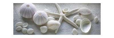 Driftwood Shells I Premium Giclee Print by Bill Philip