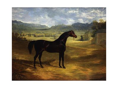 Jack Spigot, a Dark Bay Racehorse in a Paddock at Bolton Hall Lámina giclée por John Frederick Herring I