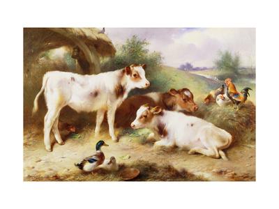 Calves and Poultry by a Byre Lámina giclée por Walter Hunt