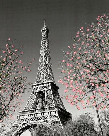 Paris Blossoms Posters