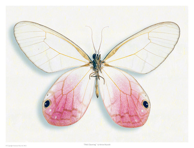 Pink Glasswing Poster by Richard Reynolds