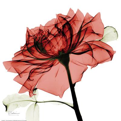 Red Rose Art by Albert Koetsier
