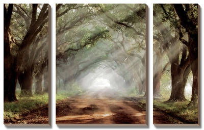 Evergreen Plantation Prints by Mike Jones